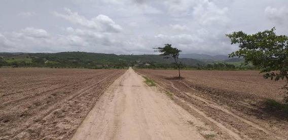 Terrenos En Venta Yaracuy Sp