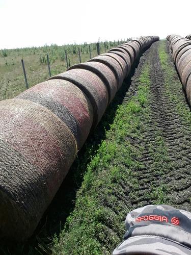 Fardos De Alfalfa Redondos 100 % Alfalfa Buenos Buenos