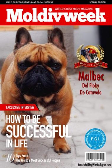Bulldog Francés Padre De Campeones En Servicio De Stud Fca!!