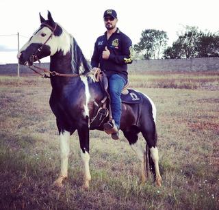Cavalo Garanhão Sem Registro Pampa De Preto