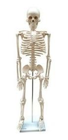 Esqueleto Humano Mod Anatomico 85 Cm Com Suporte