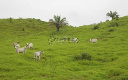 Fazenda Com 5.400 Alqueires Em Redenção Pa