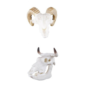 2pcs Resina Cabra Búfalo Crânio Aquário Ornamento Réptil Ter