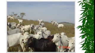 Vendo Fazenda Regiao De Ortigueira-pr ( 6047 )