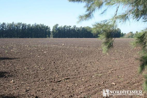 Campo En Venta En Zarate, Provincia De Buenos Aires, 100% Agrícola - Sobre Asfalto