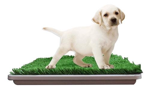 Bandeja Sanitaria Con Rejilla Para Mascotas 40% Off!!