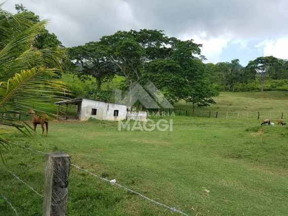 Inmobiliaria Maggi Vende Finca En Yaracal - Falcon