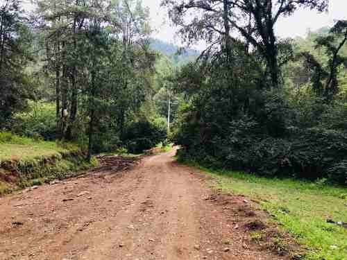 Rancho El Carrizal