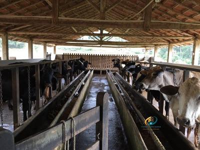 Fazenda A Venda No Bairro Vargem Alta Em Nova Friburgo - Rj. - Fv-010-1