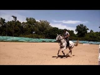 Caballo De Salto Silla Argentino
