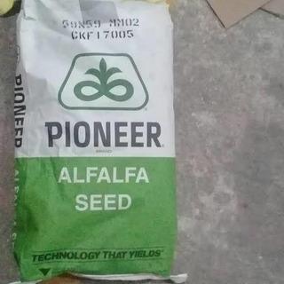 Semilla De Alfalfa Pioneer, Variedas 59n59Peletizada Al 50%