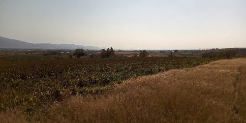 Se Vende Terreno Para Siembra En Santa Isabel Cholula