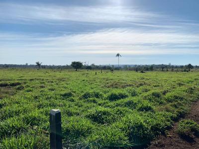 Fazenda Entre Jaci Parana Rondônia Porto Velho