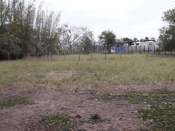 Amplio Terreno En Renta, A Pie De Carretera Paso Del Toro