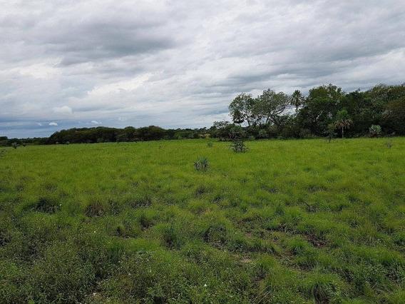 Campos Provincia De La Pampa