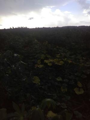 Excelente Finca Agrícola En San Pedro