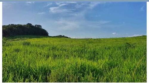 Vendo Fazenda Formada Pecuaria Cultura Em Roraima (6091)