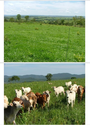 Fazenda A Venda Em Porto Murtinho - Ms (pecuária) - 1085
