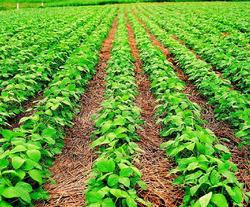 Fazenda Em Santa Maria - To, Dupla Apidão - 234