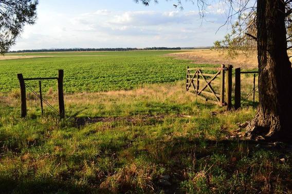 Campo Agricola En Tandil 780 Has