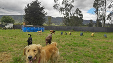 Colegio, Adiestramiento Y Hotel Canino El Parque