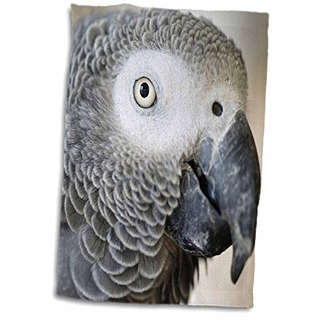 3drose Danita Delimont Pájaros Tropicales Loro Gris Afric