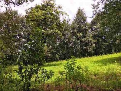 Terreno San Simón