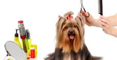 Peluquería Canina Completa Por Raza