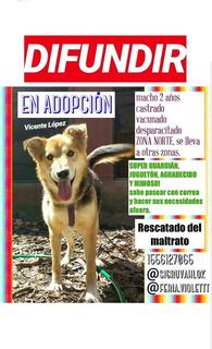 Perrito Rescatado En Adopción