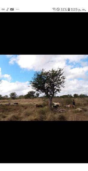 Vendo Terreno 3 Hectarias, (con Titulo De Propiedad)