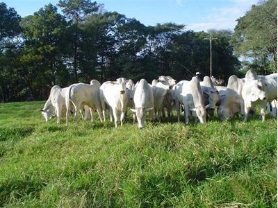 Fazenda Em Santa Rita - To, P/ Pecuária - 357
