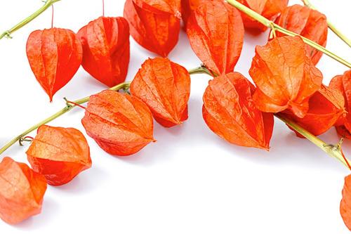 Imagem 1 de 10 de 20 Sementes Physalis Orange Lanterna Chinesa Fruta P/ Mudas