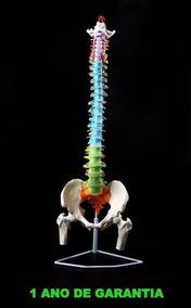 Coluna Vertebral Esqueleto Tamanho Real 82 Cm Flexível