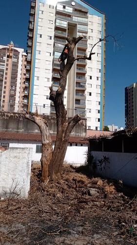 Imagem 1 de 2 de Corte E Poda De Árvores