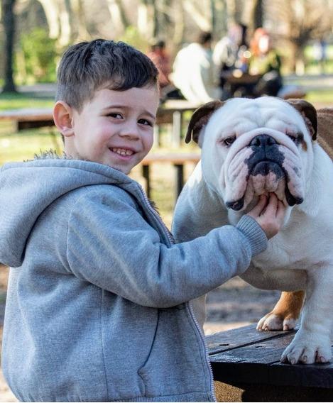 Bulldog Ingles Servicio De Stud (joven Campeón Argentino)