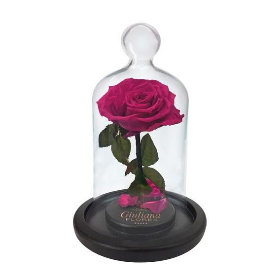 Mini Rosa Encantada Pink Giuliana Flores