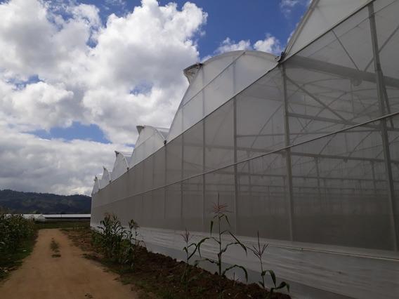 Invernaderos En Rancho Arriba