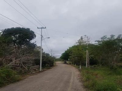 Rancho En Venta Con Hermoso Cenote De 153 Has En Valladolid Pueblo Mágico, Carretera Kanxoc