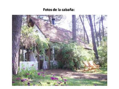Cabaña En El Bosque