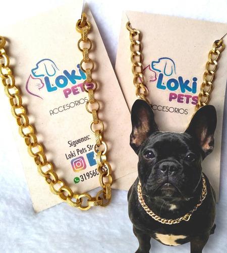 Collar Dorado Mascotas + Placa Identificación En Pvc