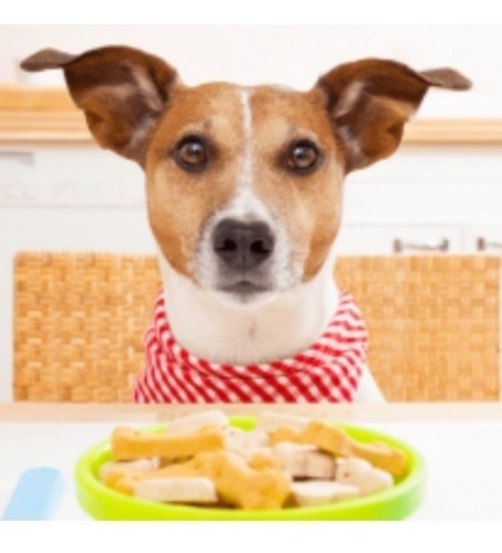 Pet Sitter, Anfitriã, Cuidadora E Hotel - Cães