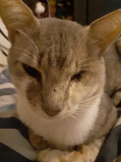 En Adopcion Precioso Gatito Tiene Un Año No Tiene Un Ojito!
