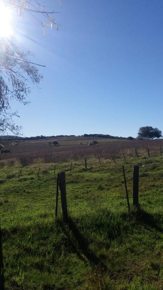 Fazenda Venda Caçapava Do Sul - Fa0028