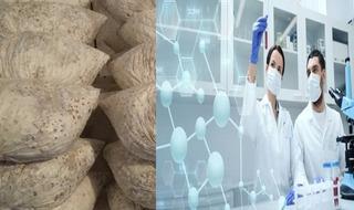 Micelio Kit Laboratorio De Semillas Hongos