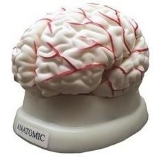 Cérebro 8 Partes Resina Plástica Semi-emborrachada Com Corte