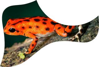 Escudo Palheteira Resinada Violão Aço Estilo Frog