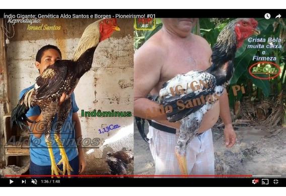 Pintos Índio Gigante - Só Pra Retirar Em Teresina