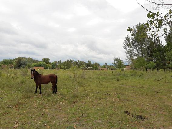 Venta - Campo - San Vicente - Lotes
