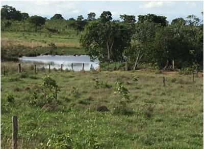 Fazenda Com 220 Hectares Em João Pinheiro - Mg - 1021