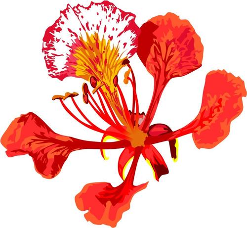 Imagem 1 de 5 de Flamboyant Vermelho Anão Amarelo Anão Vermelho 220 Sementes